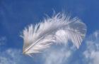 Piuma d'angelo