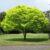 Il Verde Fa Bene alla Salute