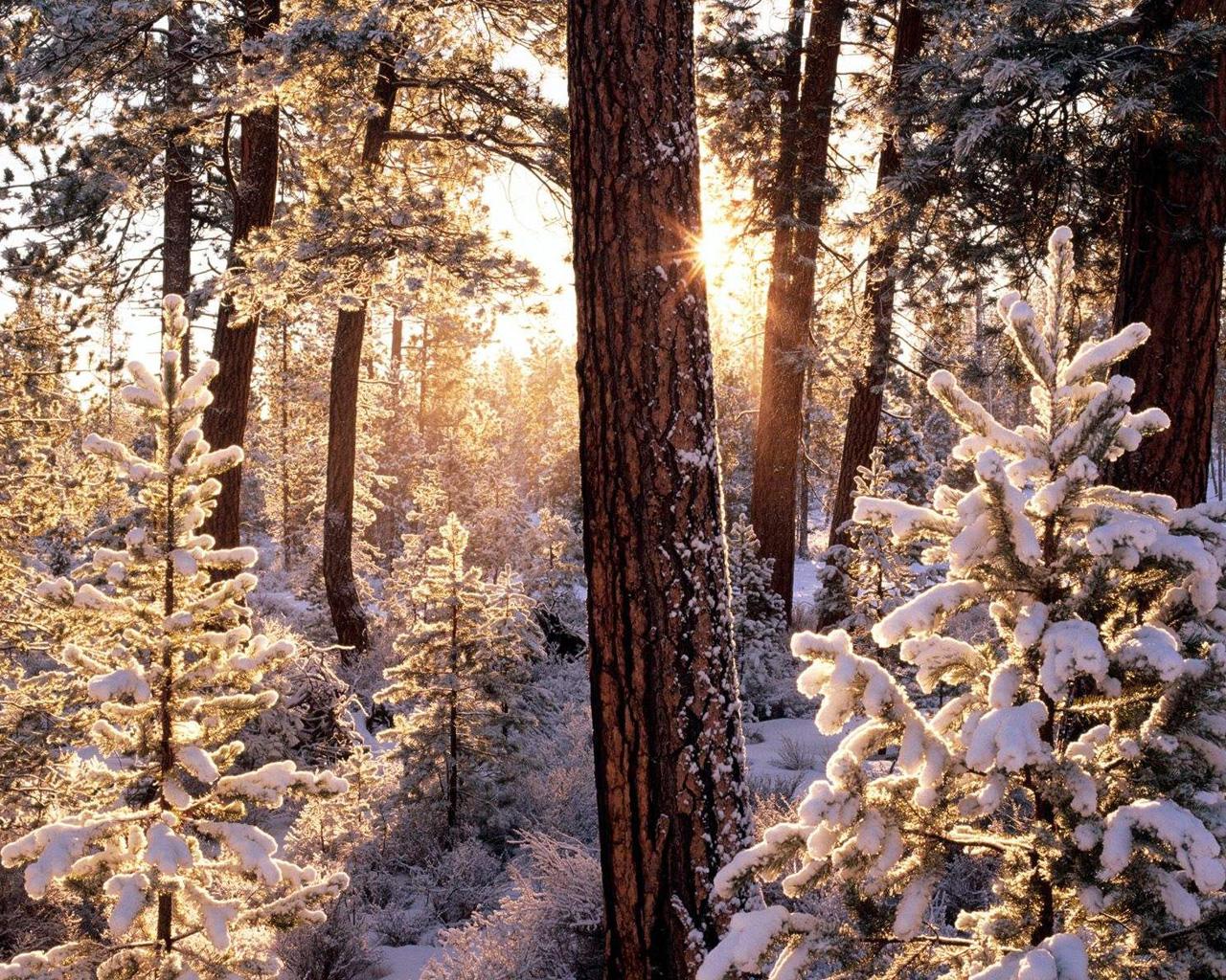 Consigli di febbraio la consapevolezza del momento for Paesaggi invernali per desktop