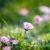 Stagioneterapia (Marzo): Aprirsi al Nuovo