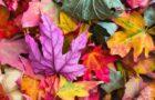 Meditazioni, Colori e Pietre d'Autunno