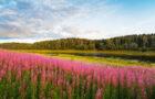 Stagioneterapia (Maggio): Benessere in Primavera